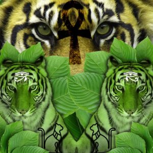 Green Tiger Riau